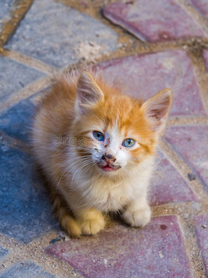 Kitten in medina of Safi, Morocco. Kitten in alleys of medina in Safi, Morocco stock image