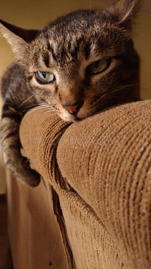 Kitten modèle photo stock