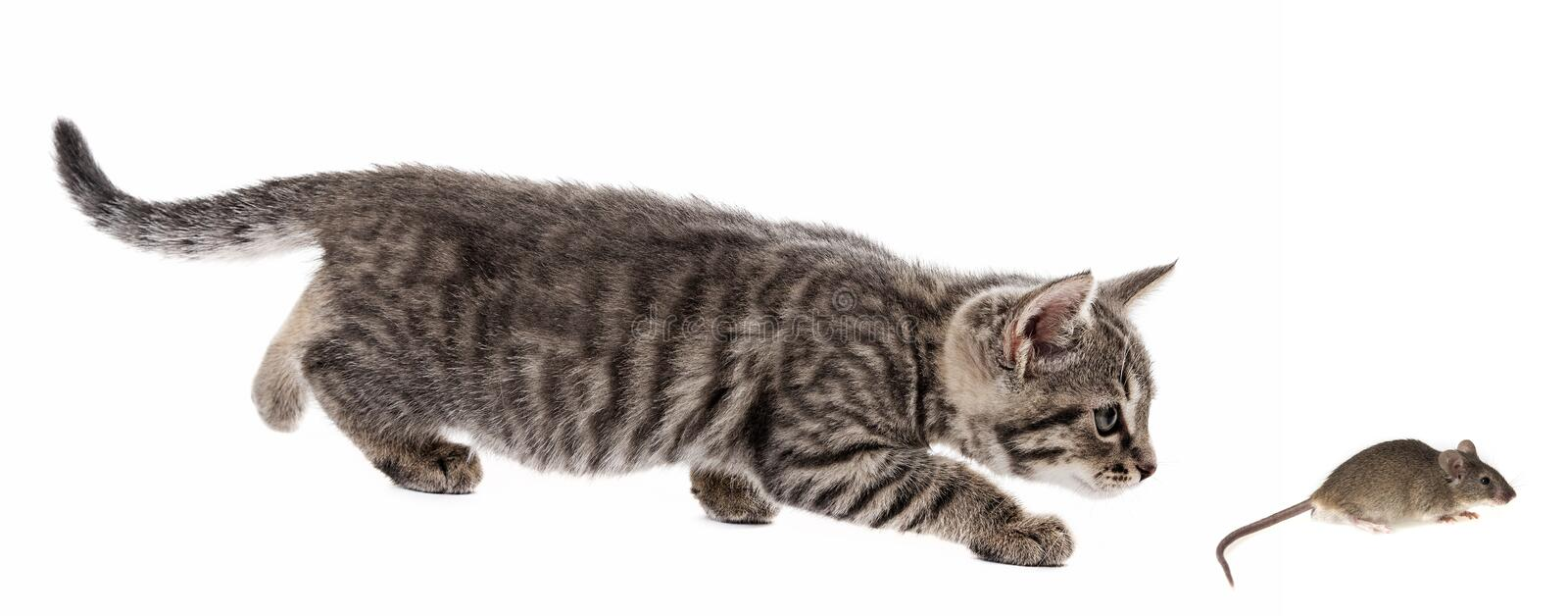 Kitten and mouse royalty free stock photos