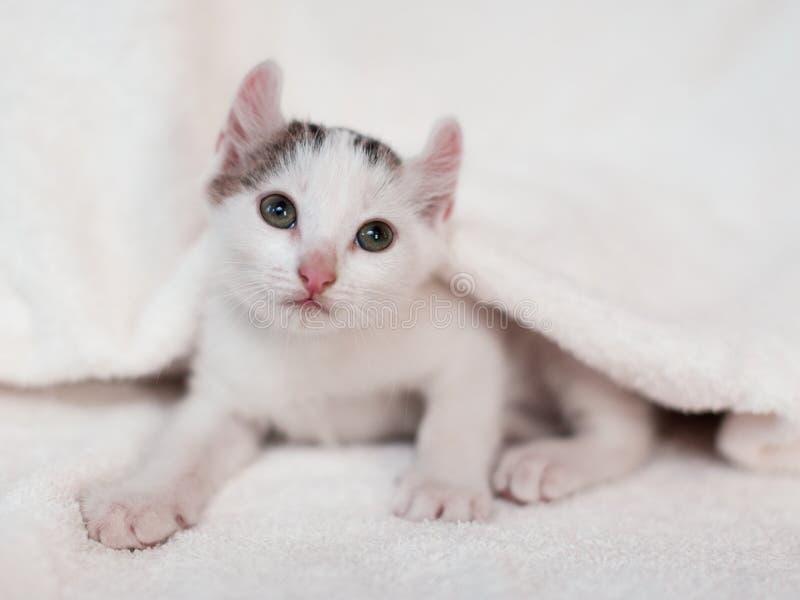 Kitten nestled against a white towel stock photography