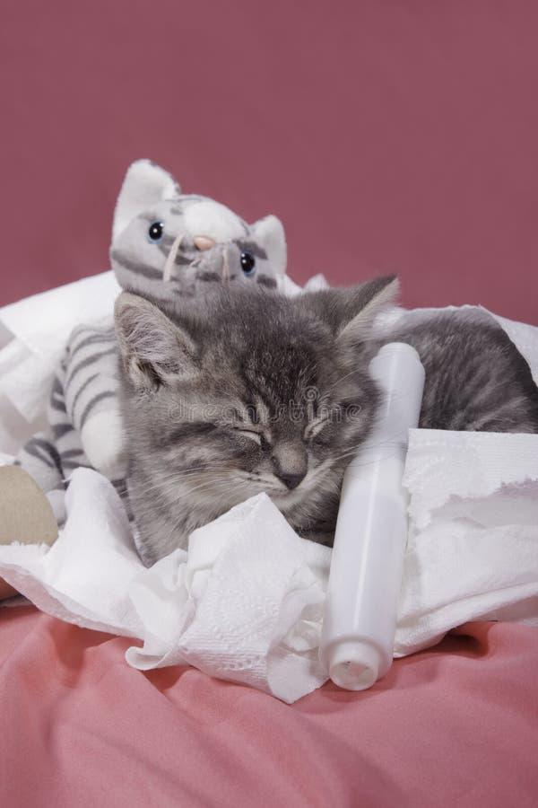 Kitten nestled in toilet paper. royalty free stock photo