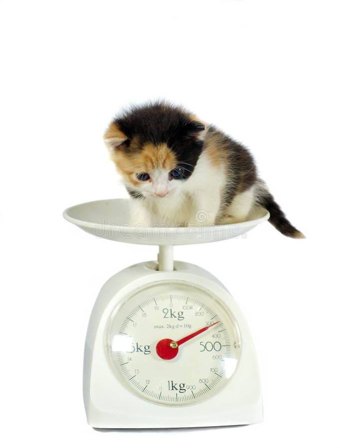 Free Kitten On The Scales Isolated Royalty Free Stock Photo - 3719335