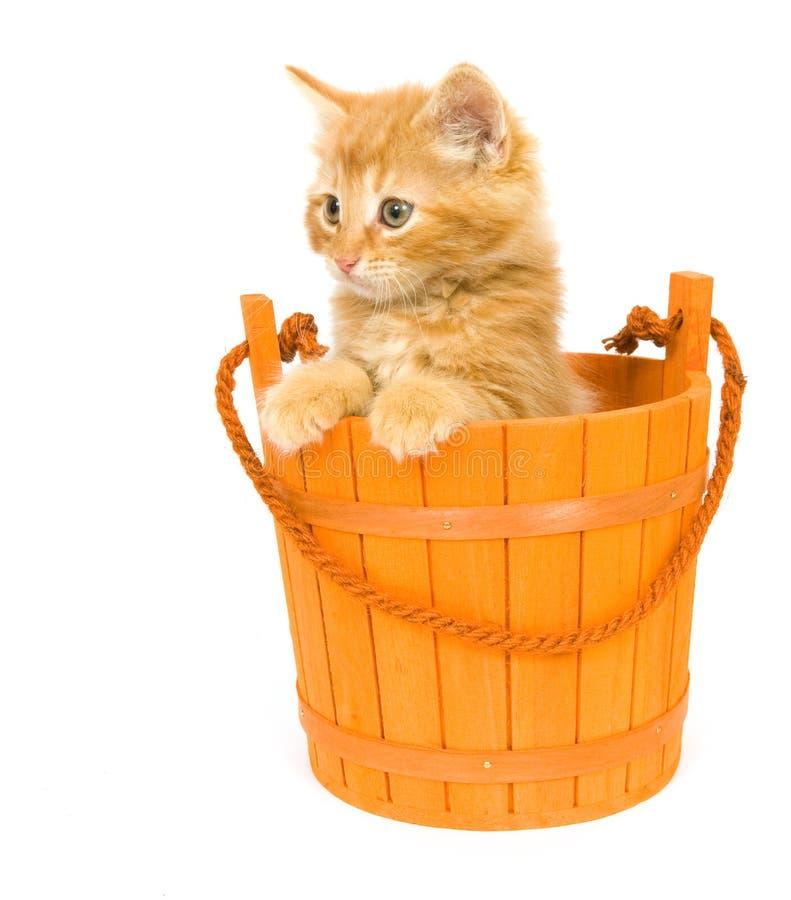 Kitten in an orange barrel stock photo
