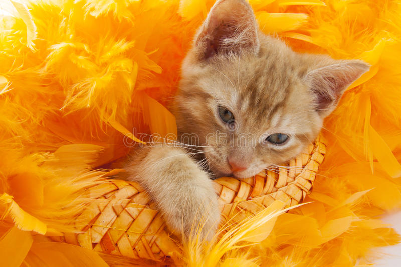 Download Kitten in orange stock photo. Image of claw, jumping - 47169528