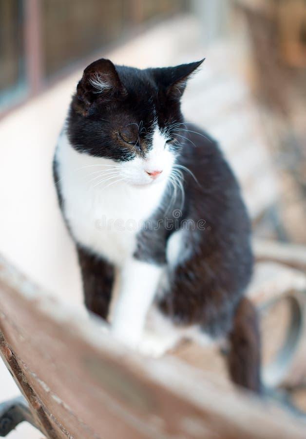 Kitten outdoors. royalty free stock image