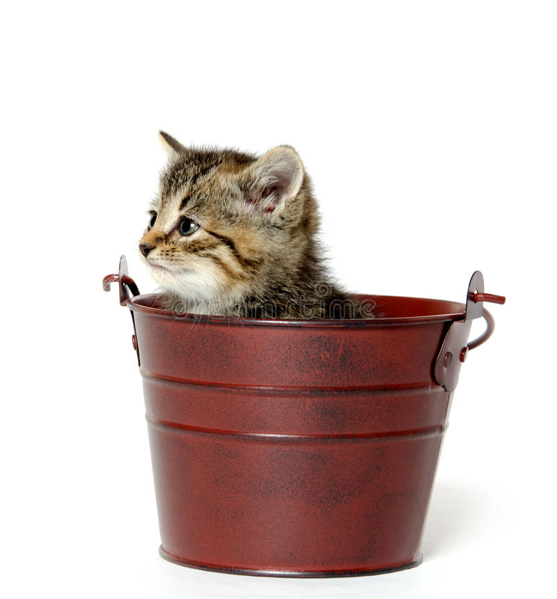 Download Kitten in a pale stock image. Image of adorable, animal - 33583721