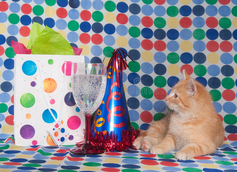 Download Kitten With Party Hat And Champagne Stock Photo - Image of polka, feline: 7537474