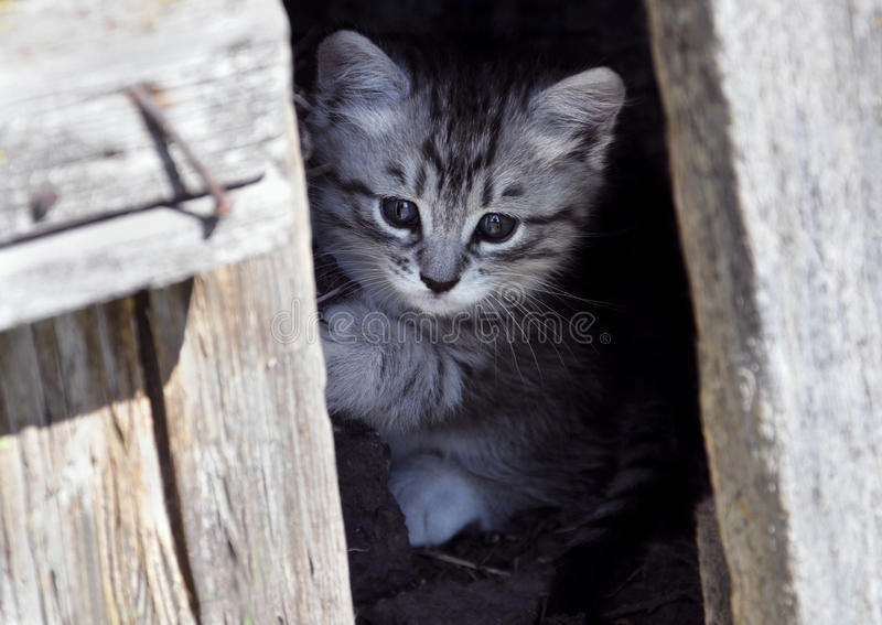 Kitten peeking out from behind the door stock photography