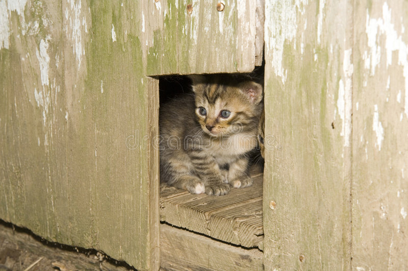 Download Kitten Peeking Out Of A Hole In A Wooden Door Stock Image - Image of & Kitten Peeking Out Of A Hole In A Wooden Door Stock Image - Image ...