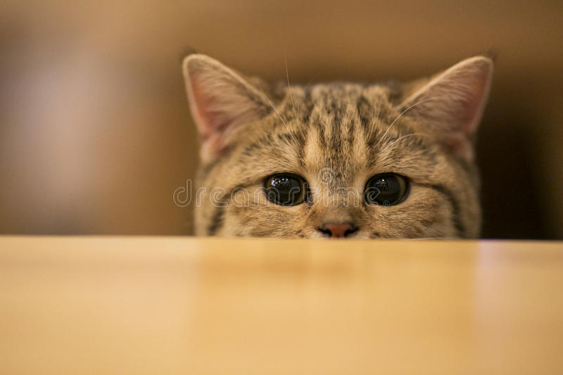 Kitten peeking something royalty free stock images