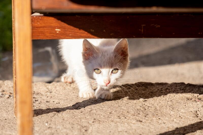 Kitten peeks out of the shadows at the light stock image