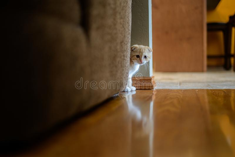 Kitten Peering Around Couch immagini stock