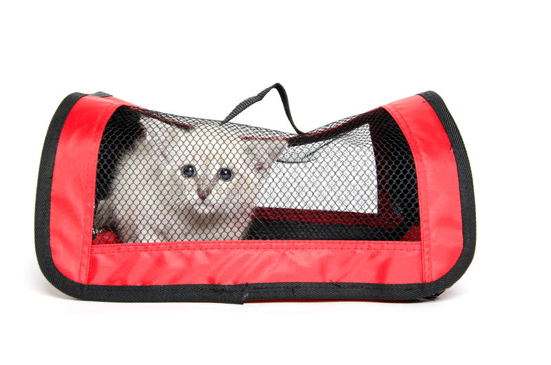 Kitten In Pet Carrier Royalty Free Stock Photos