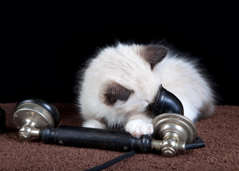 Kitten on the phone stock photos
