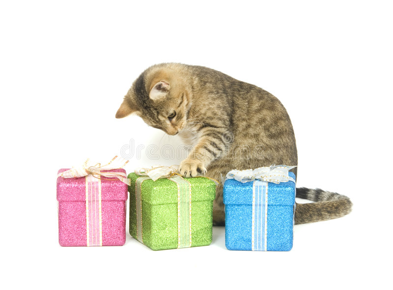 Kitten picking a present stock photos