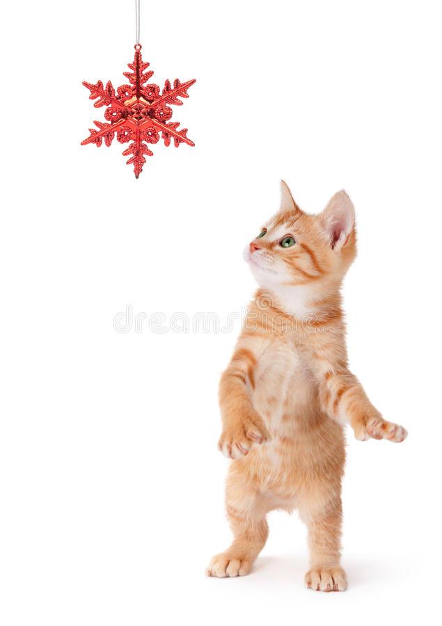 Kitten Playing anaranjada linda con un ornamento de la Navidad en blanco foto de archivo