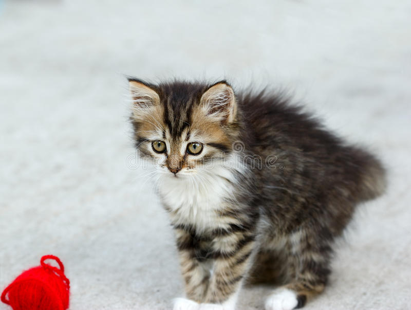 Download Kitten Playing With A Ball Of String Stock Photo - Image: 36251012