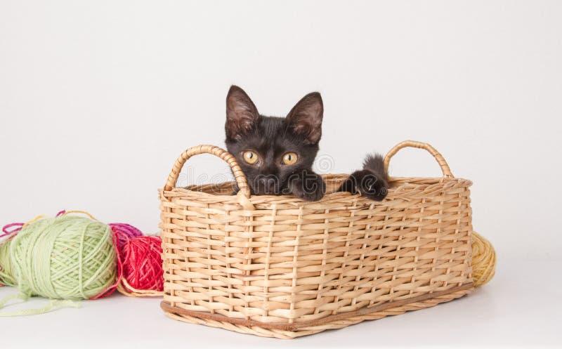 Download Kitten playing stock image. Image of black, balls, feline - 33321199