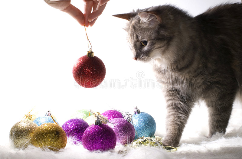 Kitten playing with Christmas ornaments. On white background royalty free stock photos