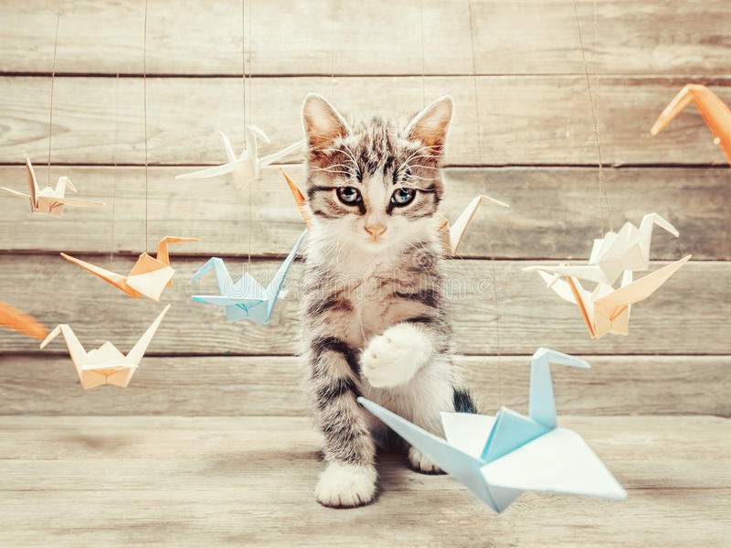 Kitten playing with colorful paper birds cranes stock image