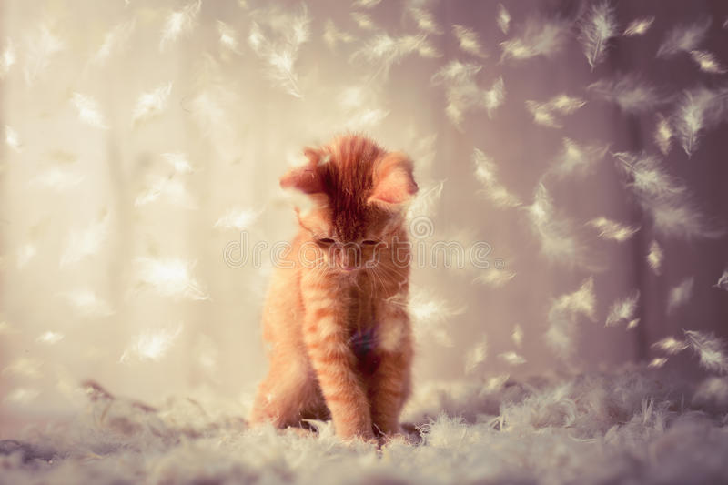 Kitten playing in feathers royalty free stock photos