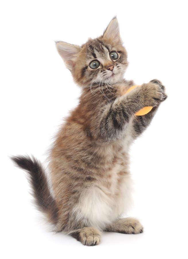 Kitten Playing med bollen arkivfoto