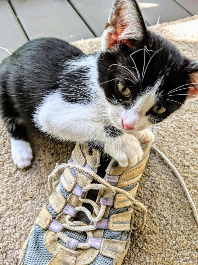 Kitten Playing met een oude Schoen stock fotografie