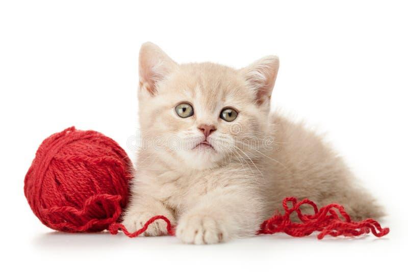 Kitten Playing met Wolgaren royalty-vrije stock fotografie