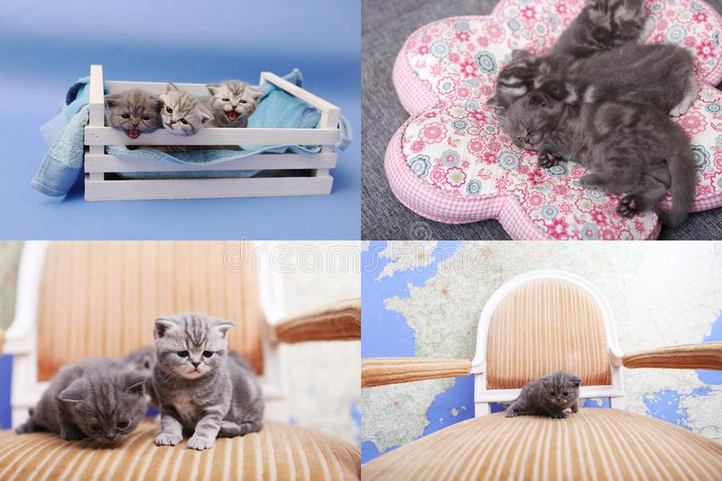 Kitten playing in a wooden crate, multicam, screen split in four parts royalty free stock images