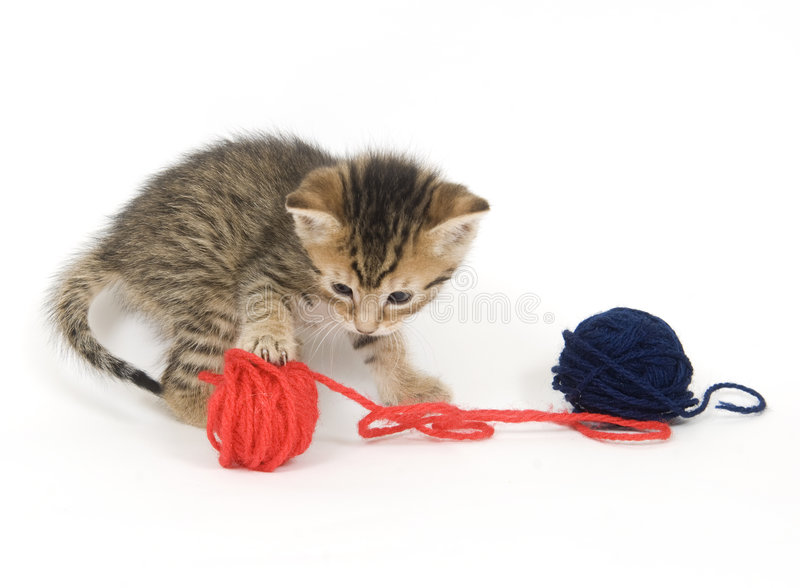 Kitten playing with yarn royalty free stock photography