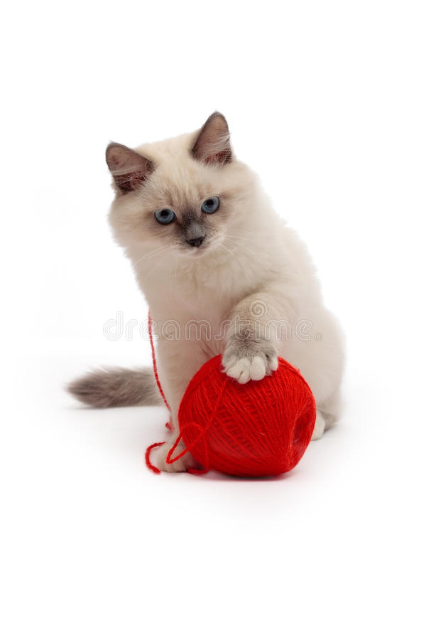 Kitten plays with a ball of red thread royalty free stock photos