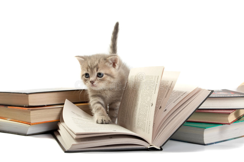 Download Kitten plays with the book stock image. Image of british - 7277545