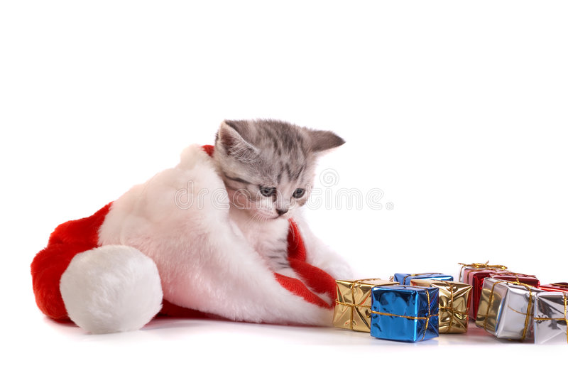 Download The Kitten Plays With Gifts Stock Photo - Image: 7067070
