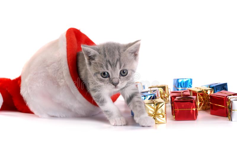 Kitten plays on a white background stock image