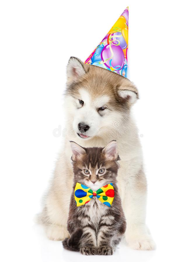 Kitten and puppy in birthday hat looking at camera together. isolated. On white background royalty free stock photo