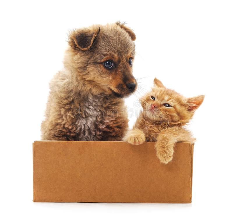 Kitten and puppy in a box. On a white background royalty free stock photo