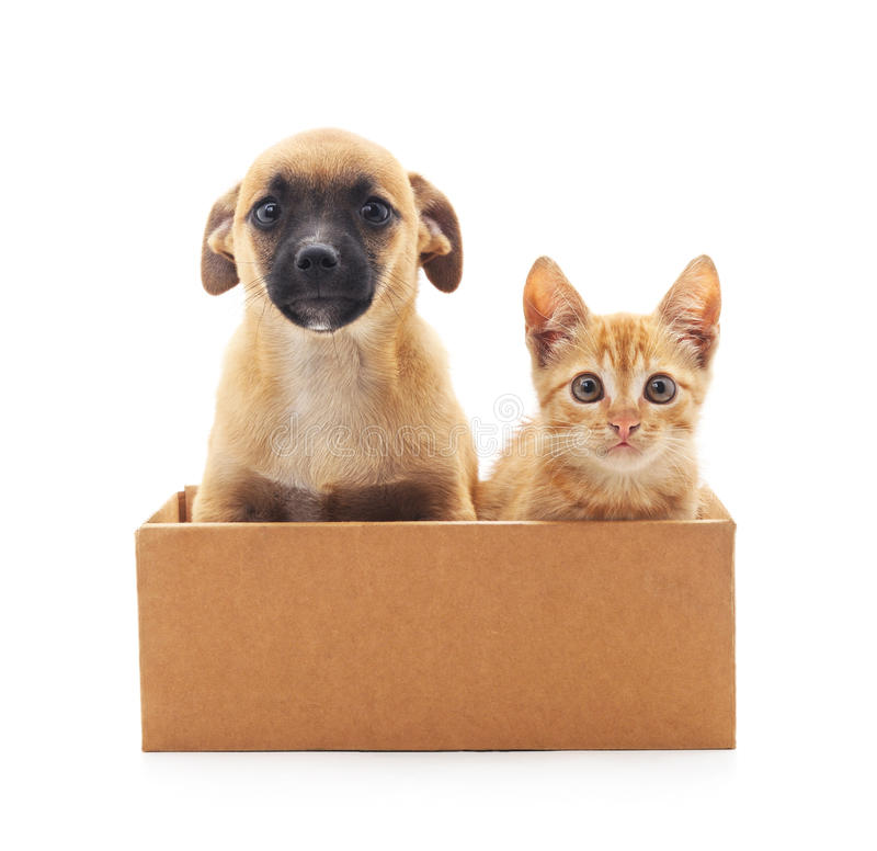 Kitten and puppy in a box. Kitten and puppy in a box on a white background stock photography