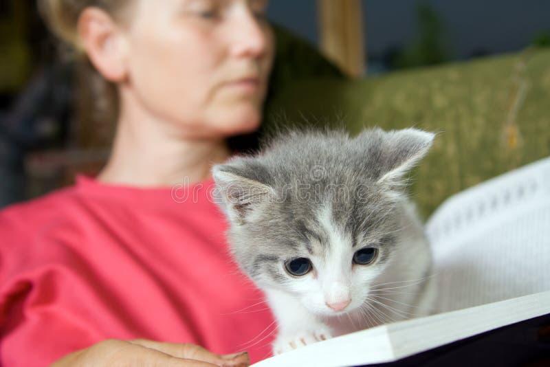 Kitten reading book royalty free stock image