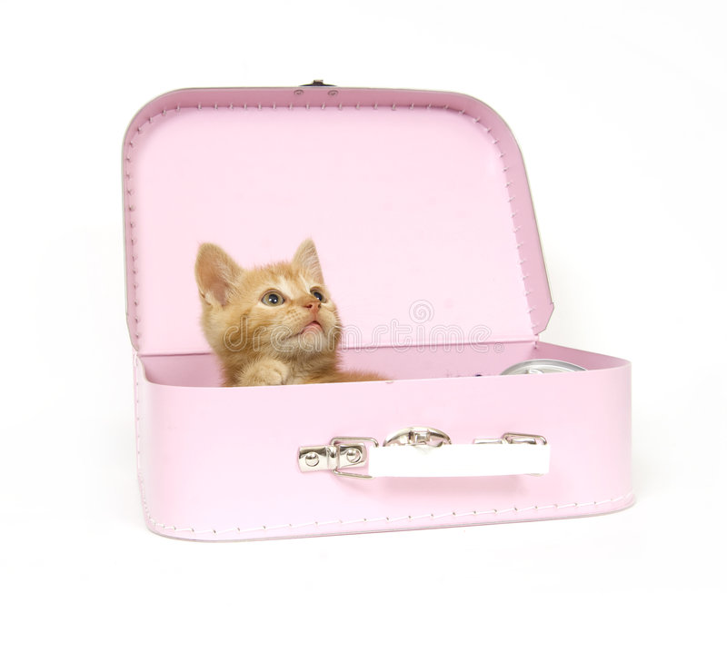Kitten ready for a trip royalty free stock photography