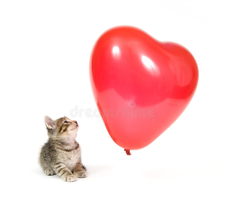 Kitten and red balloon royalty free stock photography