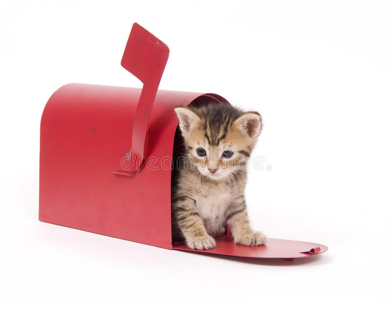 Kitten in a red mailbox royalty free stock image