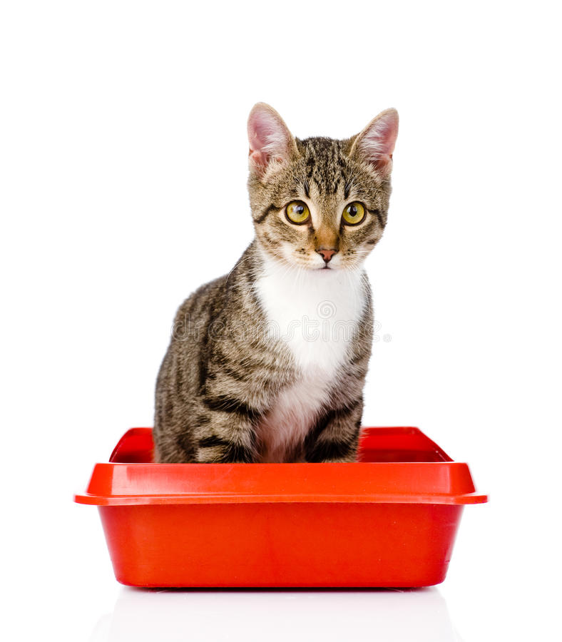 Kitten in red plastic litter cat. isolated on white background stock images