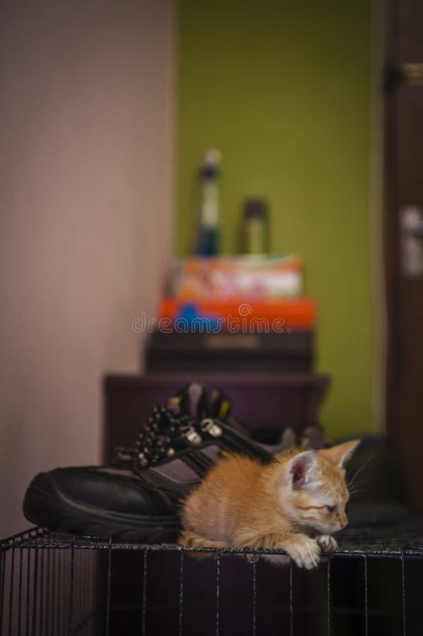 Kitten Resting royaltyfri fotografi