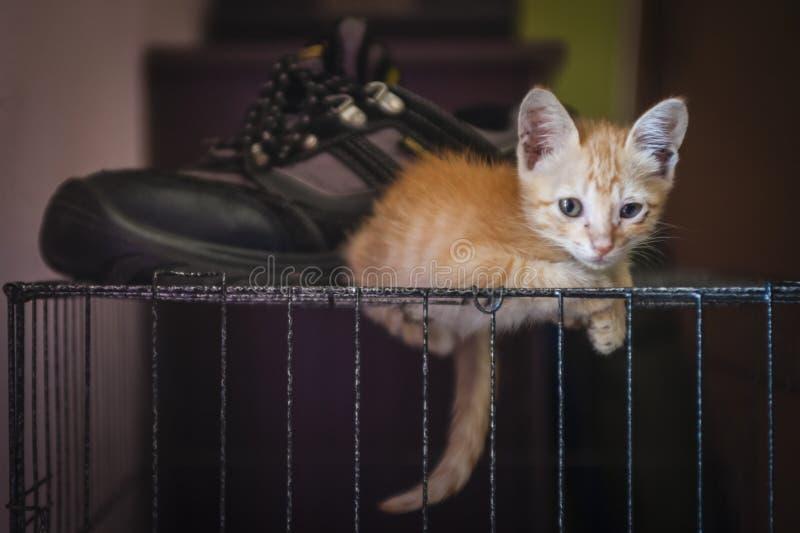Kitten Resting royaltyfri foto