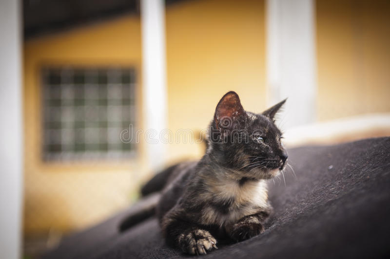 Kitten resting on old couch stock photography