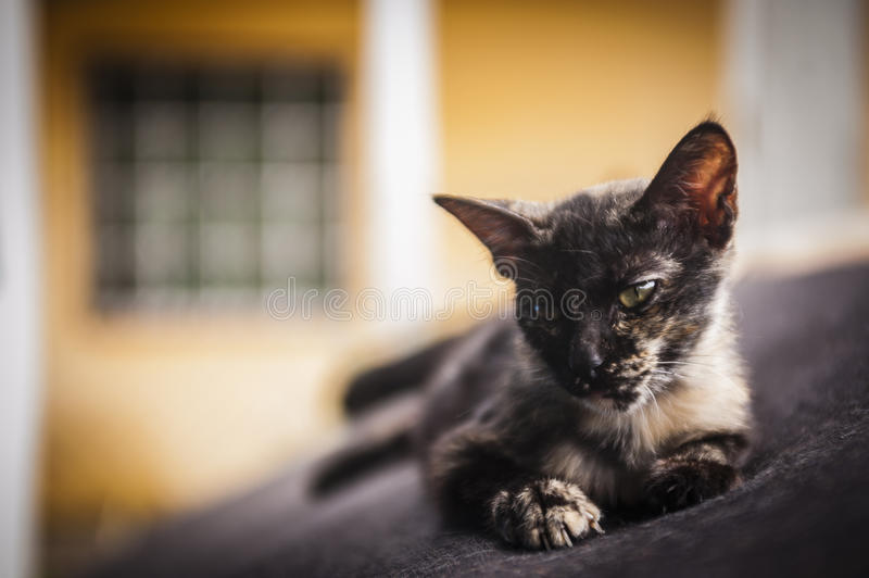 Kitten resting on old couch royalty free stock photos