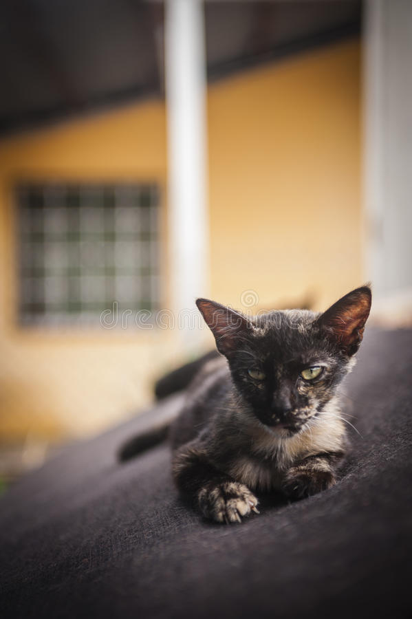 Kitten resting on old couch stock photos