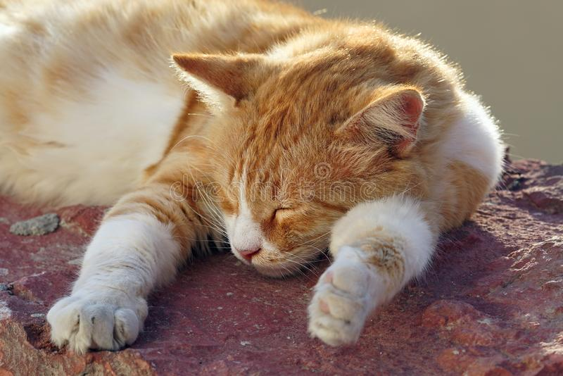Kitten resting in the sun in Oia royalty free stock images