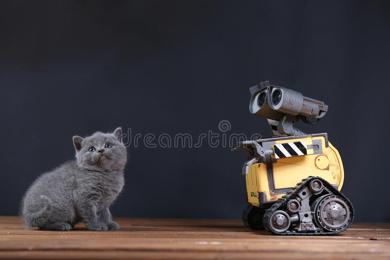 Kitten and a robot stock photo
