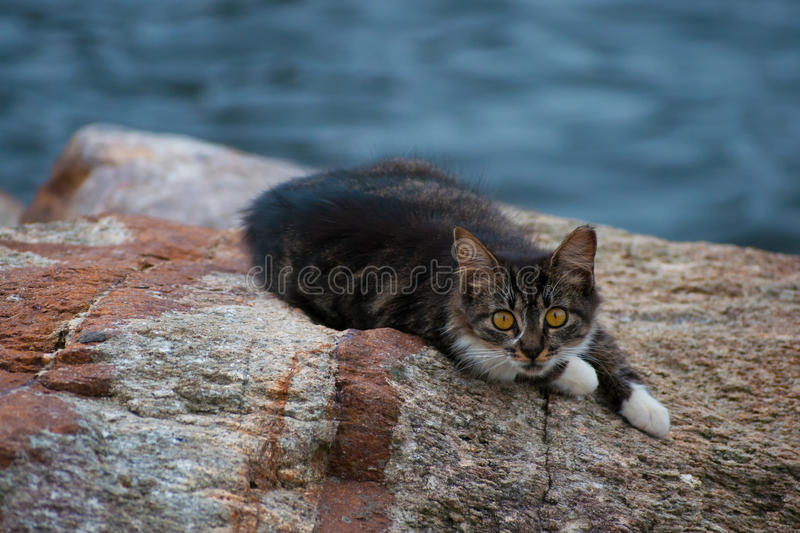 Kitten on rock by the sea royalty free stock images